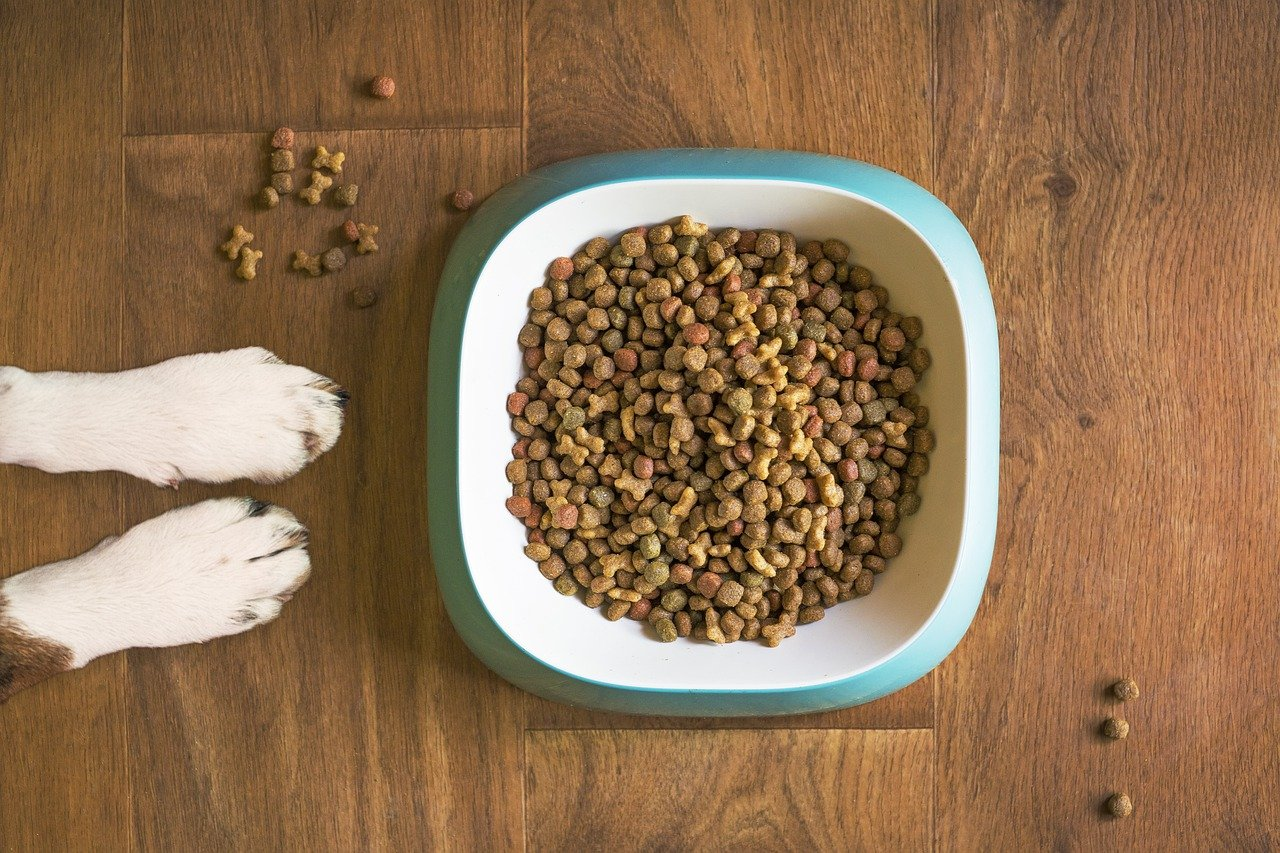 What to Know About Different Dog Feeder Bowl Uses?
