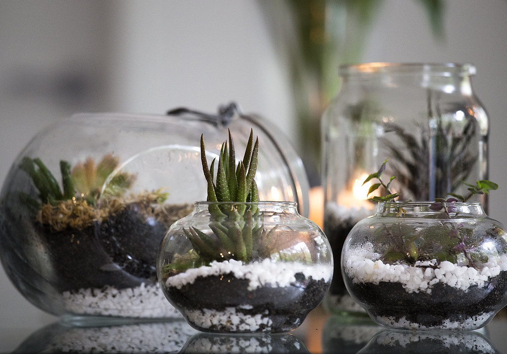 How can you make stunning terrariums?